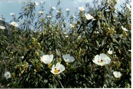 Diccionario online de las plantas medicinales